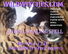 Wild Witches Animal Healing Spell